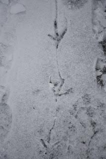 Tracking tracks 1