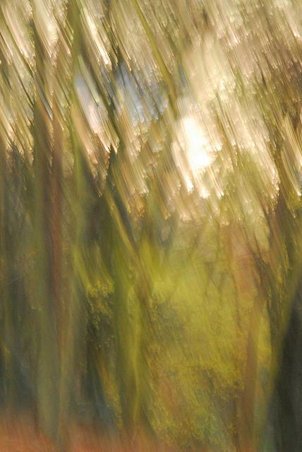 woodland