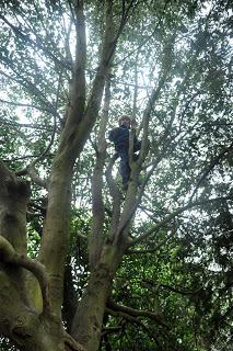 Climbing Trees 1