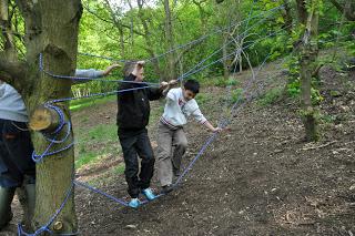 Climbing Trees 4