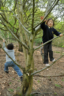Climbing Trees 5