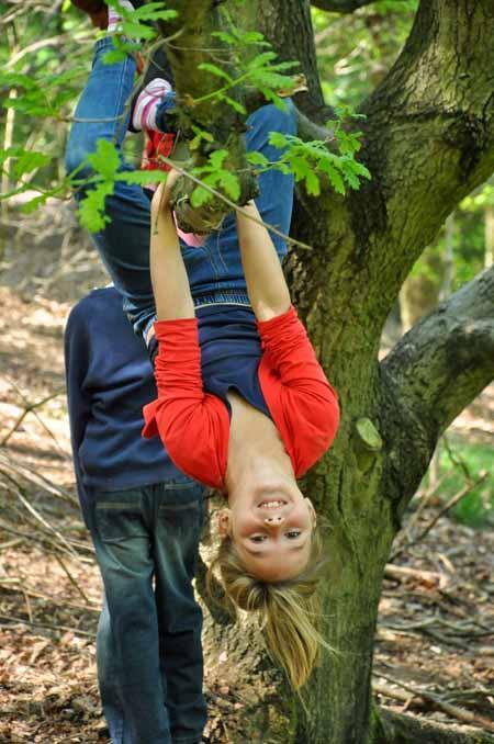 Tree Climbing Risk 1