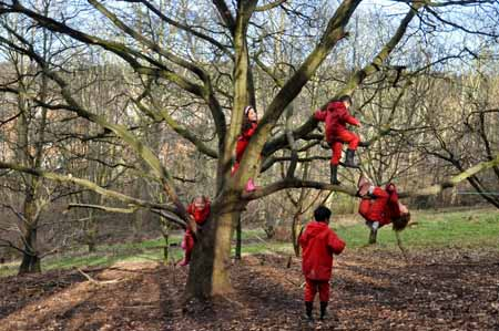 Tree Climbing Risk 2