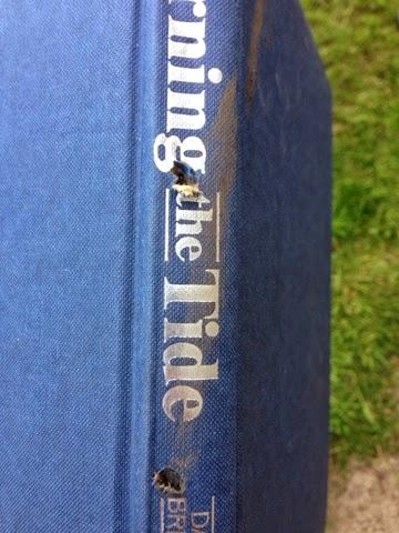 Bug Hotel Book 4